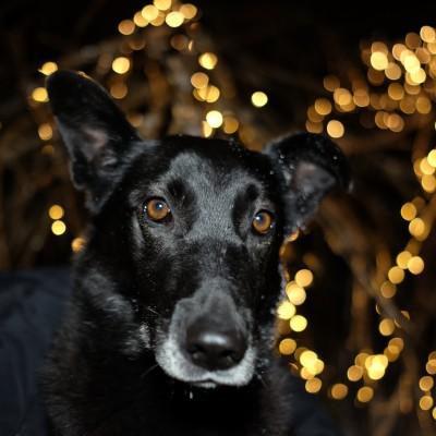 Пумба, собака из приюта