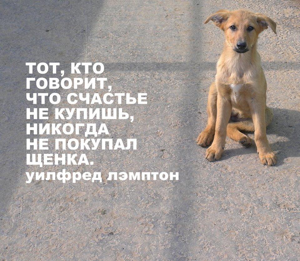 Приют для собак в Химках щенки