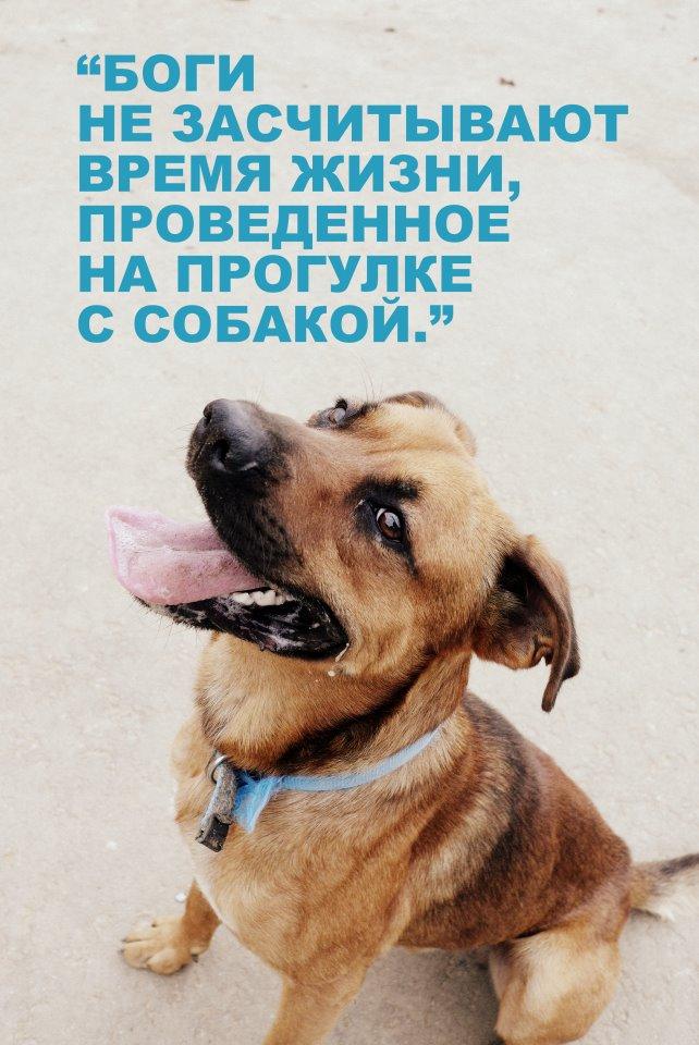 Приют для  собак в Химках