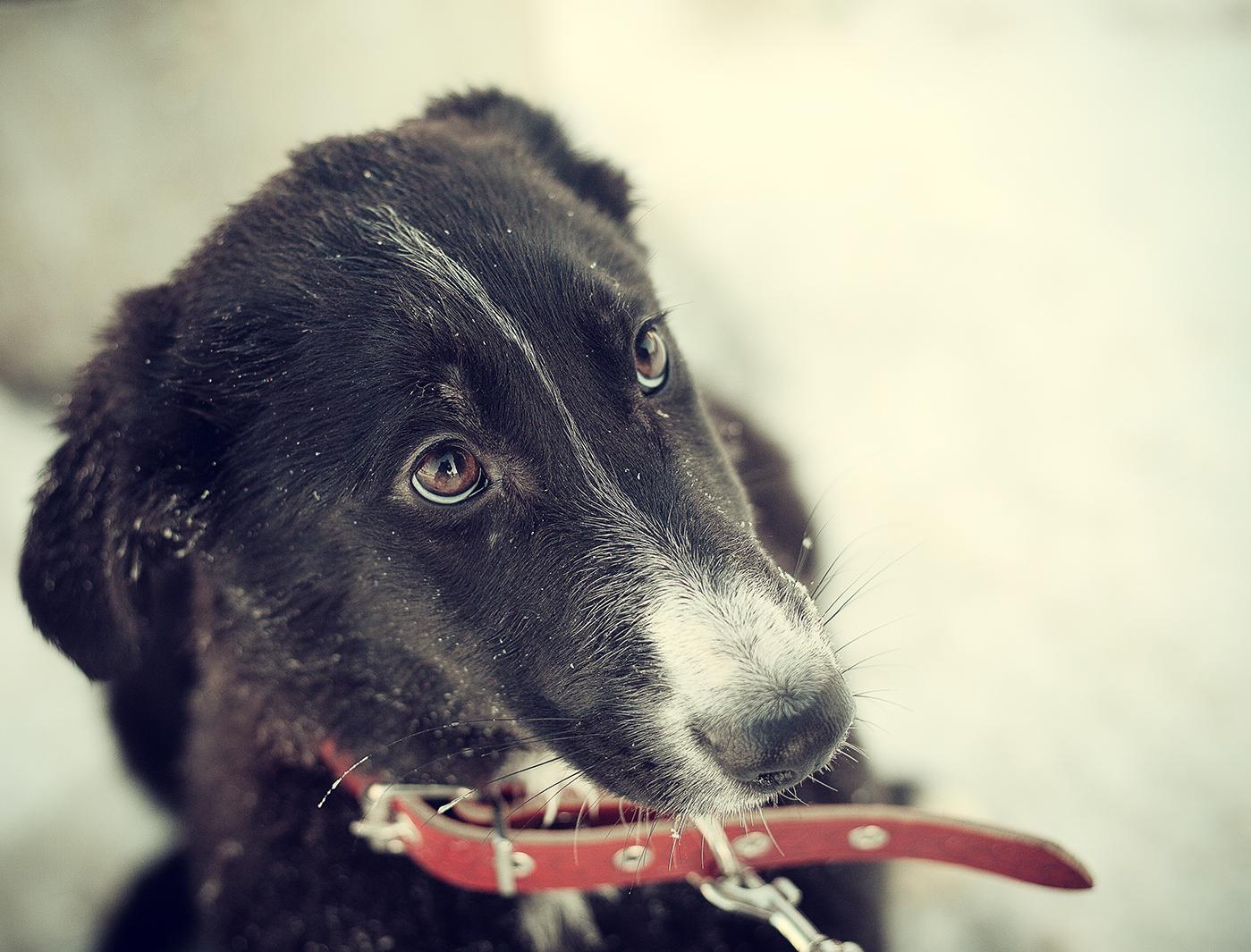 Супер Собака из приюта в дар