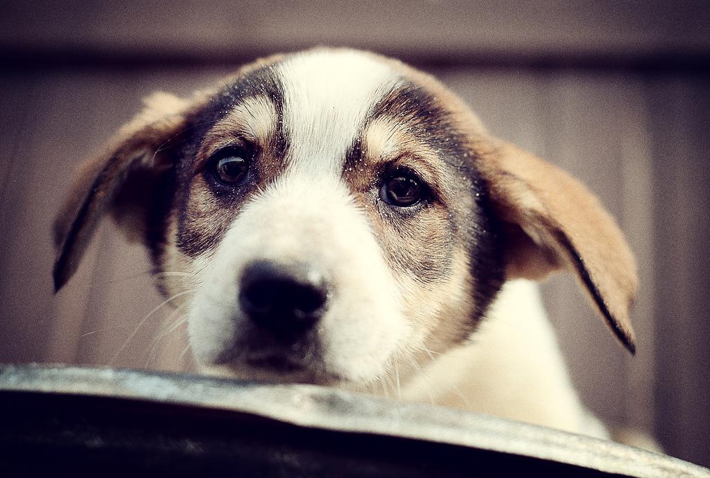 взять домой щенка