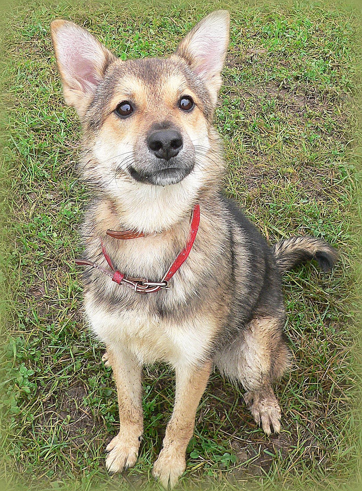 Собака до 1 года в дар