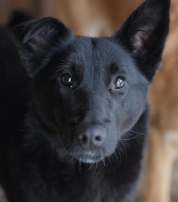 маленькая собака для дома