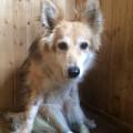 Фрося, собака из приюта