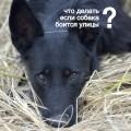 Что делать если собака боится улицы
