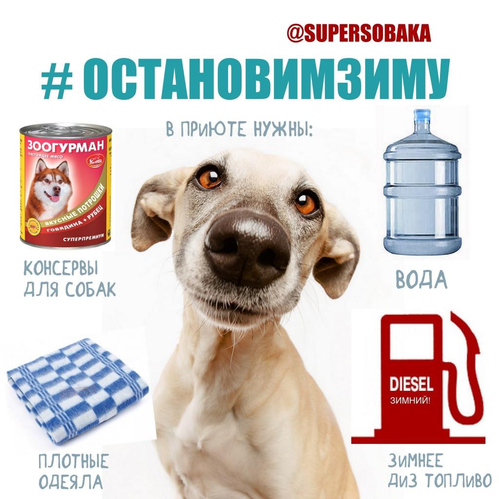 #остановим зиму помощь приюту