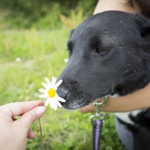 Маленькая Мини собака из приюта