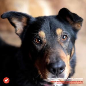 фото выставка собак из приюта