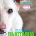 выставка собак из приюта супер собака 16 мая