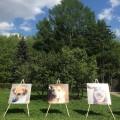 выставка собак из приюта