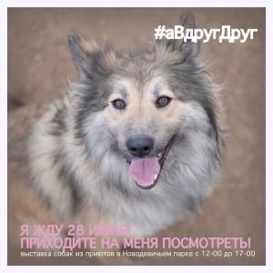 выставка собак из приюта 28 июня