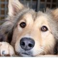 выставка собак из приюта в куркино