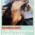 приют собак