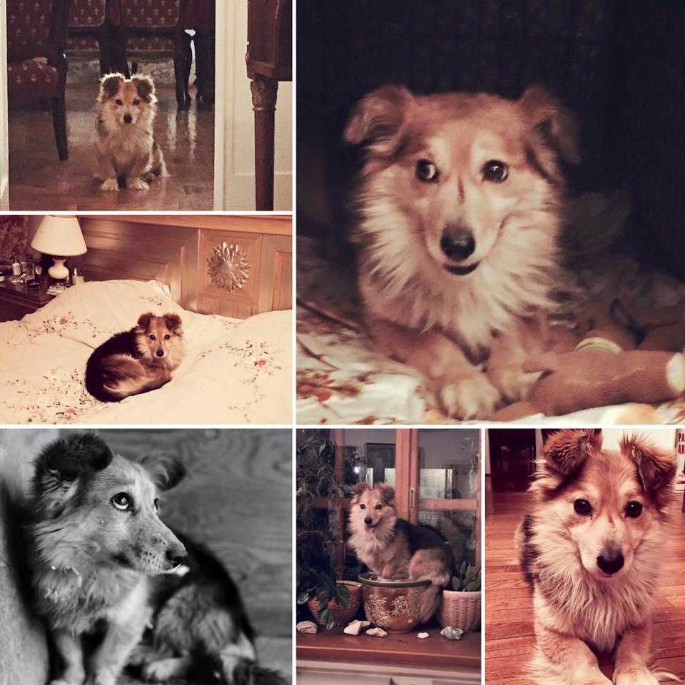 Собака из приюта дома