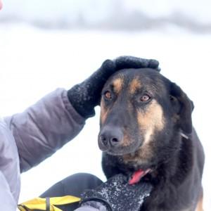 средняя собака из приюта