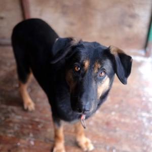 собака из приюта для семьи