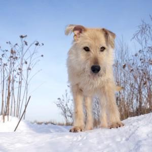 терьер собака из приюта
