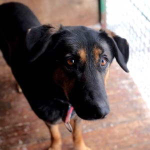 Красавица Верона собака из приюта