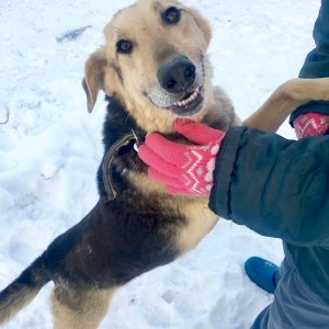 Гарик - добрый пес из приюта