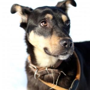добрый и ласковый щенок