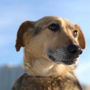 Гарик собака из приюта ждет хозяев