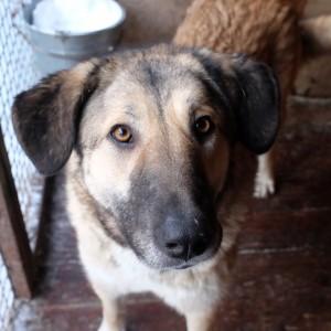 добрая собака из приюта в химках