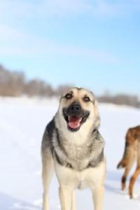 Зося собака из приюта