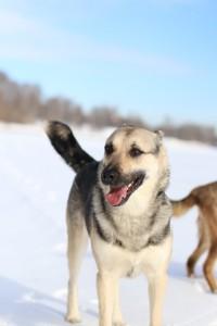 Зося собака из приюта Москва Химки