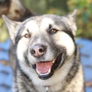 Пёс Лайка в дар