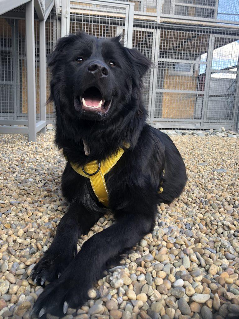 пушистый добрый пес из приюта Тедди супер собака